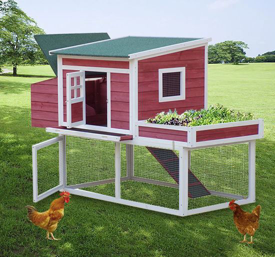 """Picture of 67"""" Farmhouse Wooden Chicken Coop with Display Top, Run Area and Nesting Box"""
